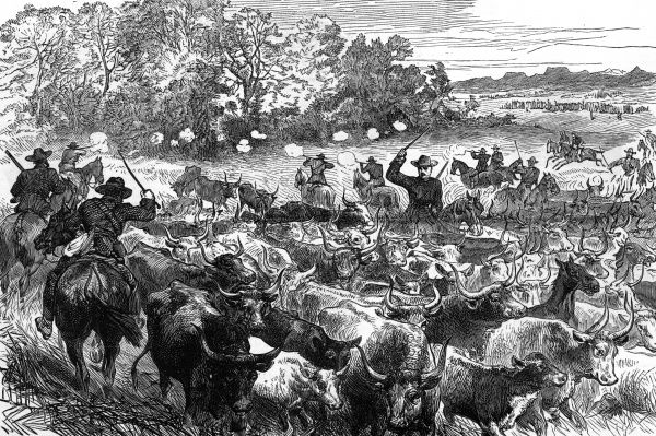 Recovery of cattle from the Basutos by the British forces, during the Basuto Gun War, 1880. Date: 1880