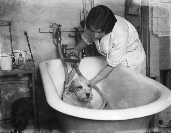 A lucky dog getting a shower in a roll-top bath!