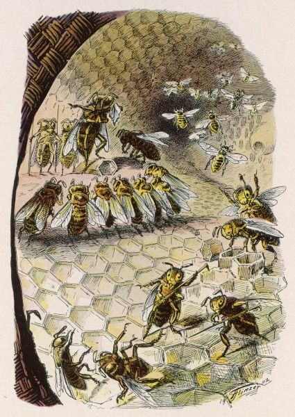 Humanised bees in a hive