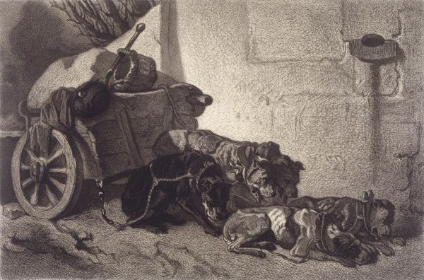 Five exhausted dogs resting in Brussels, Belgium, still harnessed to their cart