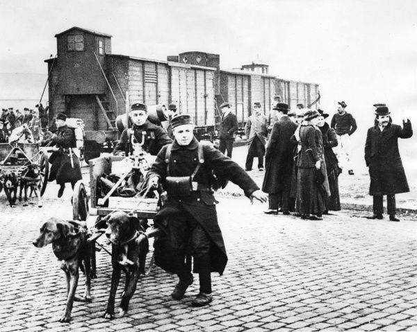 Belgian troops with dogs pulling artillery carts, Belgium, leaving for the front line towards the start of the First World War. Date: 25 October 1914