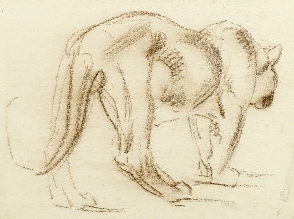 Sketch of the back view of a big cat, possibly a puma