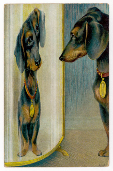 A dachshund admires its reflection in a distorting mirror