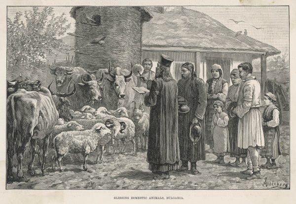 An Orthodox priest blesses the livestock on a Bulgarian farm