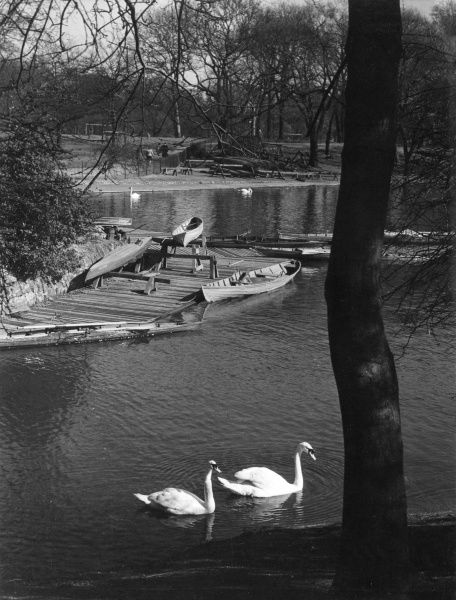 The boating (landing) stage, a peaceful study, with swans, in Regent's Park, in the heart of London. Date: 1930s