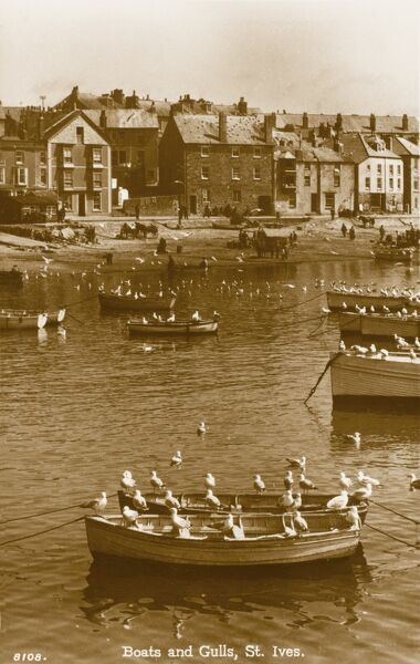 A lovely photograph of gulls perched on the rowing boats in St Ives Harbour, Cornwall