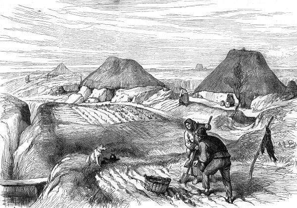 Cultivation in a bog village in County Roscommon. Peasants farm the land while a dog looks on. Village dwellings border the fields and other women can be seen in the background working on the land