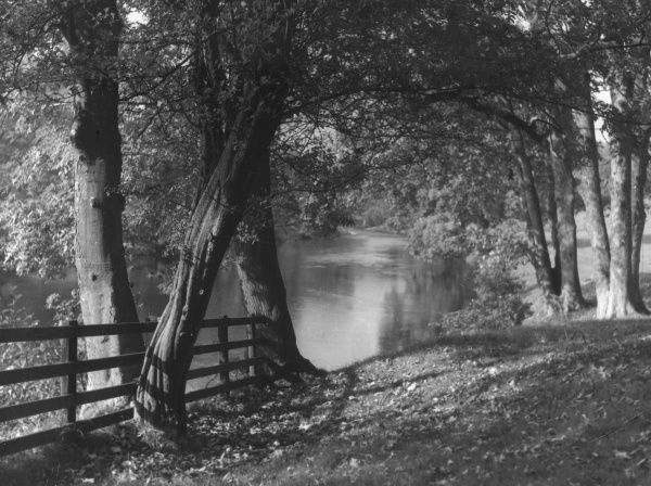 A charming vista in Bolton Woods, Yorkshire, England. Date: 1950s
