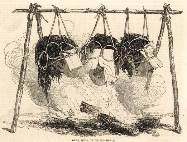 The Dyak method of drying heads. The enemy's head is cut off, the brains scooped out before being hung (as shown) on a rod of bamboo