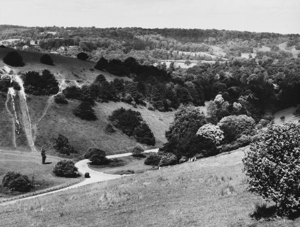 A fine view of Box Hill, Surrey, and the road which climbs up to the 700 feet top of this beauty spot, above the River Mole, named because of the many box trees on it