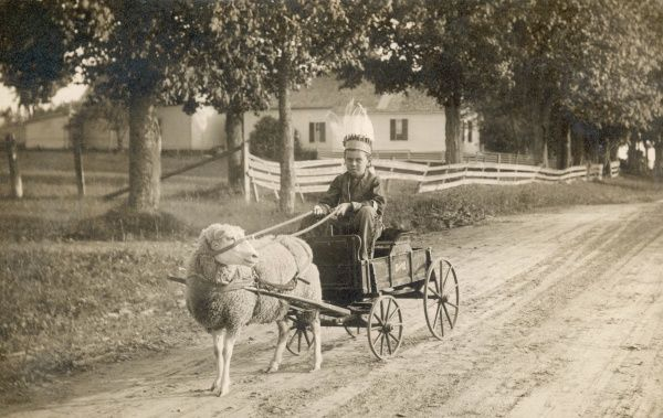 An American boy, dressed as an American Indian, in a custom made cart, drawn by a pet sheep, America