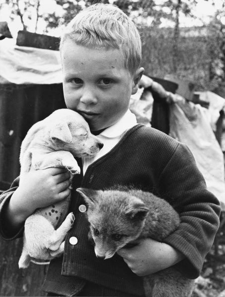 Love me, love my dog.. or was that fox? A little boy cuddles a puppy and holds a fox cub in his other arm. Date: 1960s