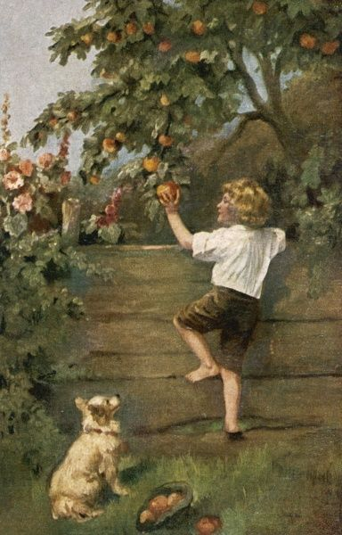 A little boy climbs a fence in order to steal some enticing- looking apples: a little dog watches approvingly