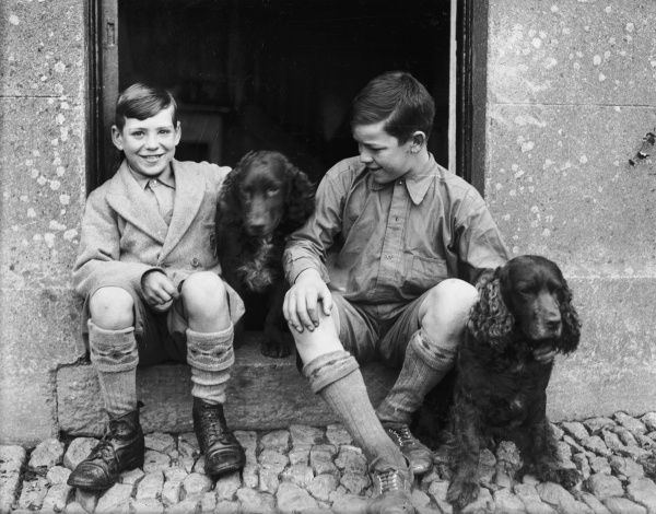 Two little boys, brothers perhaps, sitting on a doorstep with their pet spaniels