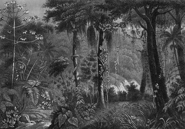 The Brazilian rainforest 150 years ago. Date: 1850