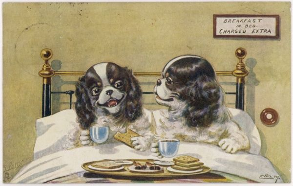Two spaniels have breakfast in bed, even though it costs extra