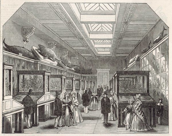 The new Coral Room : in 1881 visitors will have to traipse all the way to South Kensington to enjoy the natural history exhibits of the Museum