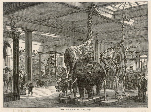 The Mammalia Saloon : the natural history department will not be moved to South Kensington until 1881