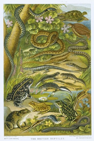 A colourful illustration of various reptiles with a river bank background from 'Boy's Own' magazine