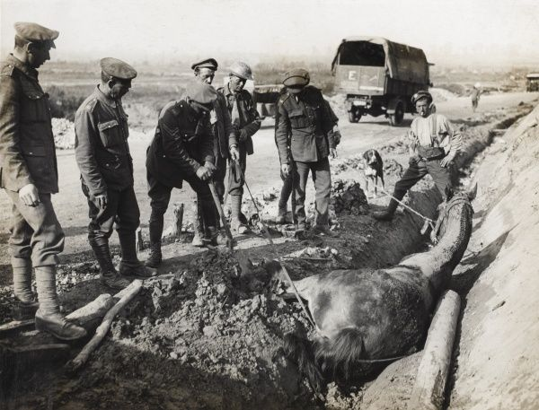 British soldiers trying to rescue a horse which has fallen into a ditch, blown by the force from a bursting shell, on the road to Reutel, Flanders, during the First World War. Date: 1914-1918