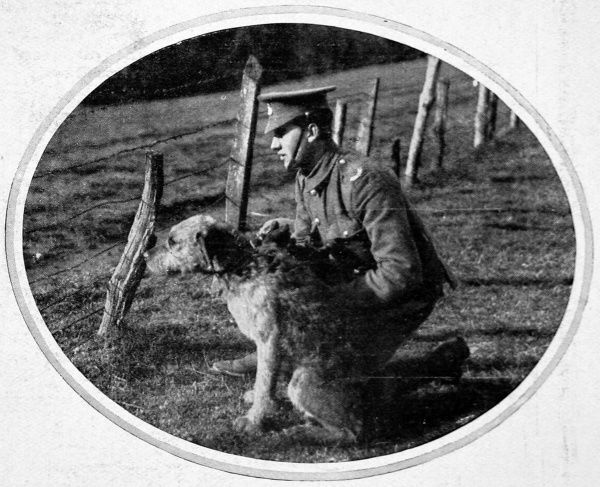 A British war-dog being trained for cross-country work. Dogs were used frequently, particularly by the Germans, during World War I, as auxiliaries in ambulance work, and for sentry and patrol work