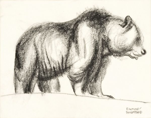 Pastel sketch of a Brown Bear by Raymond Sheppard