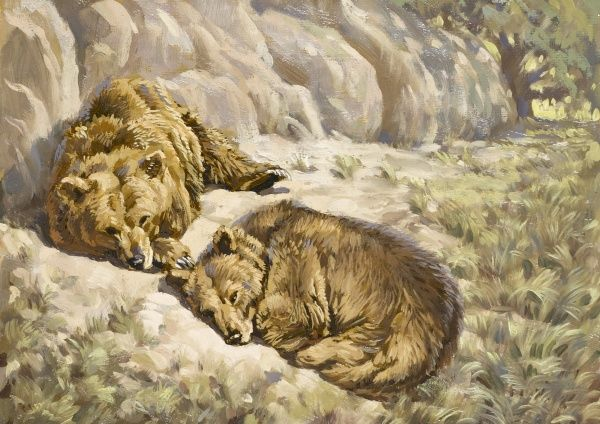 Two Brown bears sleeping near some rocks. Oil painting by Raymond Sheppard