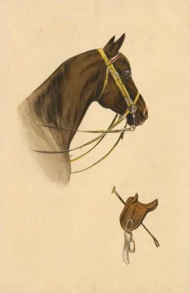 A fine equestrain portrait of a brown horse wearing a double-reined pelham bit. Date: 1910s