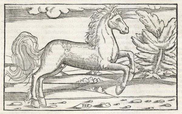 Bucephalus, the horse of Alexander the Great