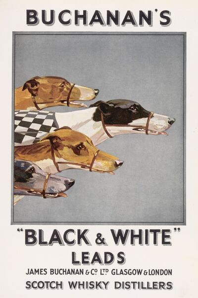 Four greyhounds race to the finish line in an advertisement for Buchanan's Black & White Scotch whisky