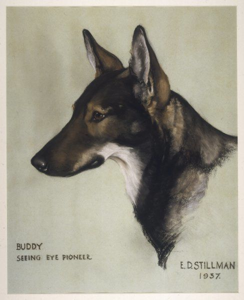 'Buddy', guide dog of Morris Frank of Tennessee, the first dog trained in Switzerland by Mrs Dorothy Eustis, founder with Morris Frank, in 1927, of The Seeing Eye organisation
