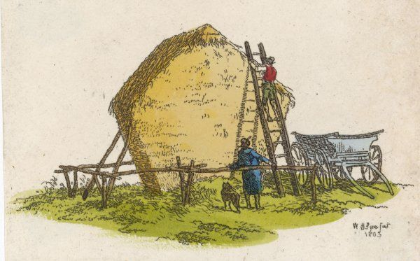 Building a haystack : not only is it carefully shaped, but the stack is 'roofed' to make sure it holds together in rough weather