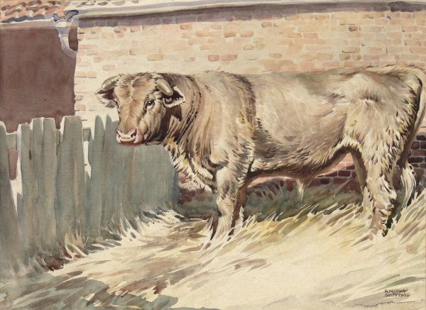 Bull standing in a farmyard stall. Watercolour painting by Raymond Sheppard