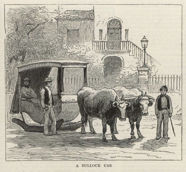 A Bullock car on the island of Madeira