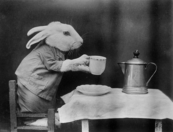 A rabbit has a cup of coffee. Date: early 1930s