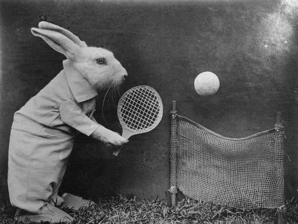 A clever rabbit playing tennis. (Bunny Austin perhaps, ha ha!). Date: early 1930s