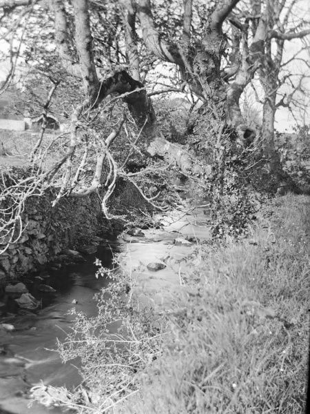 View of Caman Brook, below the Cathedral fishpond, in St David's, Pembrokeshire, Dyfed, South Wales