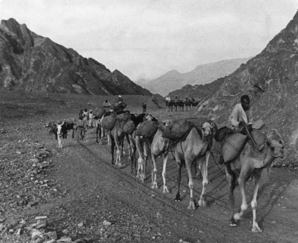 A camel caravan in Oman - only in the heart of the Arabian Gulf do the caravan bells still sound regularly. The huge, noble camels stride in peace among oven-hot rocks. Date: 1930s