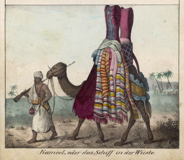A camel carrying two ladies, discreetly hidden from view