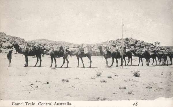 Camel Train in Central Australia
