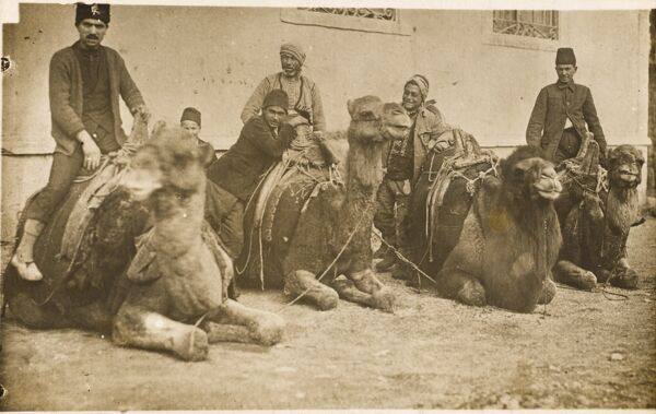 Four camels and their drivers resting in Constantinople