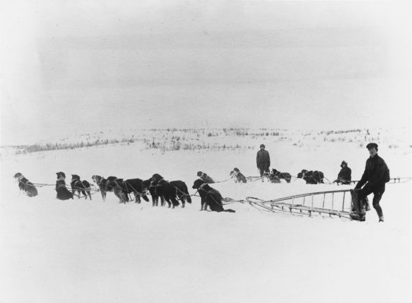Canadian dog teams and sleighs in the snowy landscape of North Russia. Canadian troops formed part of the allied intervention force fighting on the side of the anti-Bolsheviks during the Russian Civil War