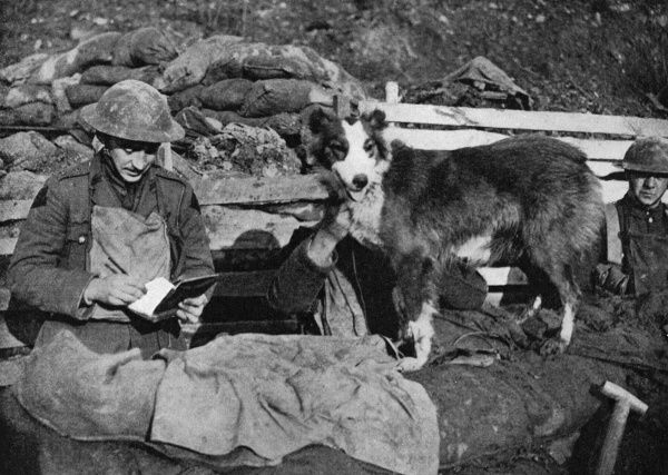 A canine courier of the great war, an officer writes a message as the dog waits to deliver it in the trenches