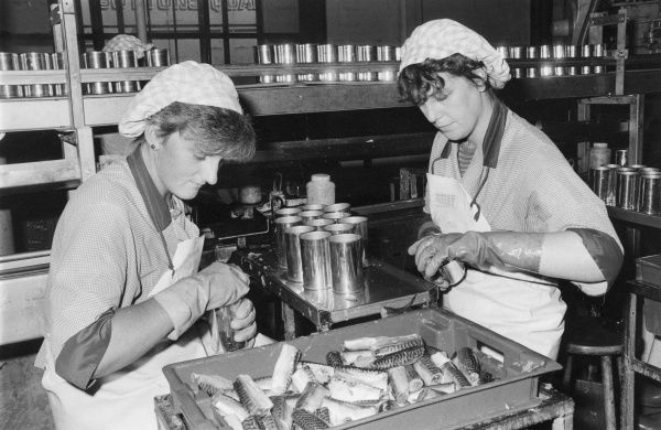 Two young women canning mackerels at 'Shipman's' factory, Newlyn, near Penzance, Cornwall, England