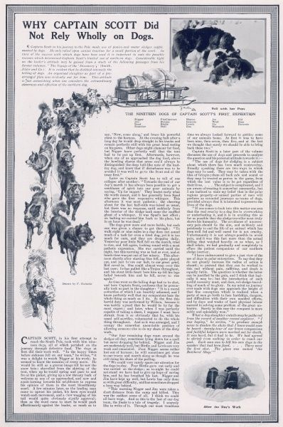Page from The Sphere with drawings and photographs of the huskies used in Captain Scott's first polar expedition in 1901-4, and editorial explaining why Scott did not make full use of sled-dogs in the same way as Amundsen who beat Scott