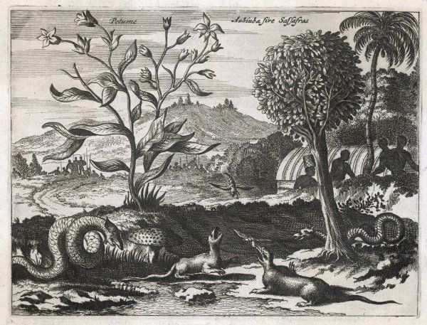 The beautiful landscape and fauna of the Caribbean as it was seen by the first Europeans