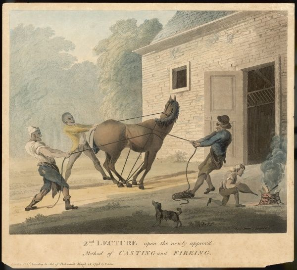 The 'Newly approved method of casting and fireing'. A horse is firmy restrained with ropes before branding with a hot poker
