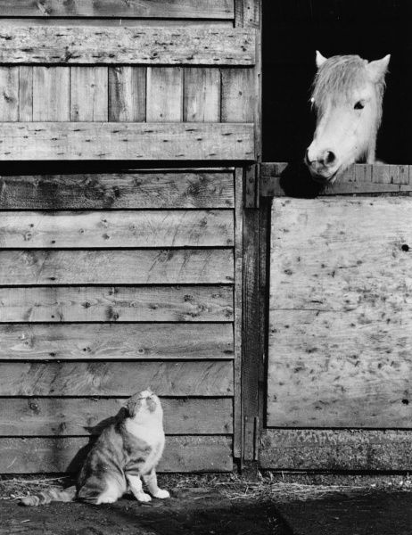 A cat and a horse appear as if they are having a conversation as they enjoy the sunshine. Date: 20th century