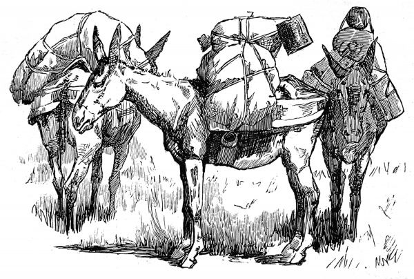 US cavalrymen with their pack mules carrying supplies for the war against the American Indians. This war, which took place in Southern Arizona and Northern Sonora, Old Mexico, was one of the last outbreaks of hostilities between the US Federal Army