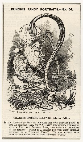 A satire on Charles Darwin -- after charting the 'Descent of Man' he goes even lower and studies worms